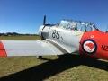flying-kiwi
