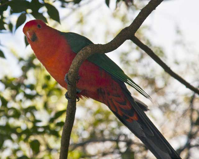Part-of-the-wild-bird-life