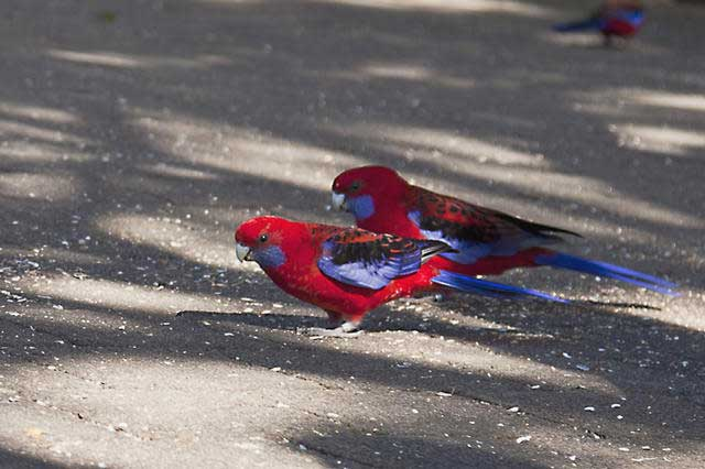 Some-of-the-wild-bird-life