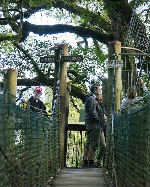Wade-about-to-do-the-treetop-walk