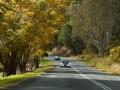 Past-Queenslands-winter-kissed-trees