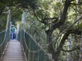 The-treetop-walk