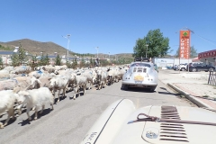 Sheep-and-Porsche-hold-us-up-China-Day-1